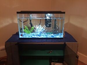 20 gallon fish tank includes everything!