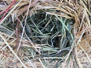 Green Feed and Straw Round Bales For Sale