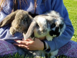 Baby French Lops