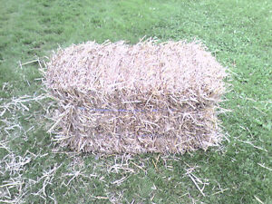 Small Square Bales of Wheat Straw for Sale