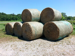 Alfalfa and Timothy Hay - High quality 4 x 5 rounds
