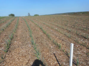 Your opportunity to own an Large Organic Farm