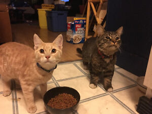2 Male Cats Looking For New Family.