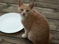 Two male barn cats for sale