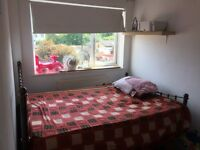 Large double room available for single working professional