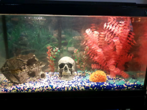 29 gallon fish tank with stand and fish