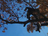 The Healthy Tree- Tree care services