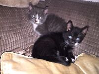 ADORABLE KITTENS - Health checked - Ready to leave for new homes and adventures