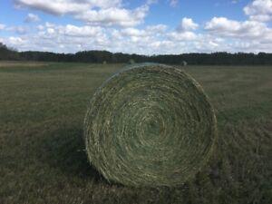 Alfalfa Second cut bales