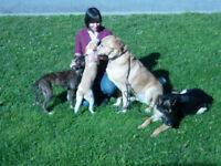 Maître-chien, Pension Familiale/Master Dog Trainer, Fam Boarding