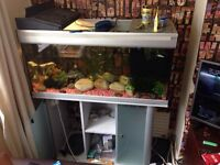 200 litre tropical fish tank and stand full setup with fish