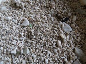 Gravier pour Aquriaum eau salée Gravel for Salt Water Aquarium