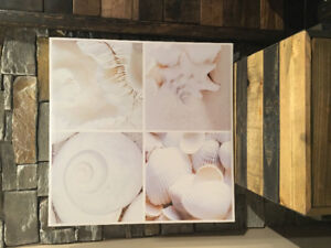 Seashell Frame - Cadre de coquillages