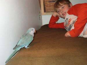 WANTED female Blue Quaker Parrot