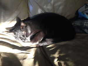 Midnight is missing in Avondale