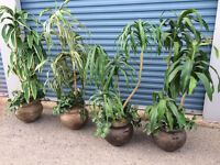 ARTIFICIAL PLANTS – ALL SHAPES AND SIZES