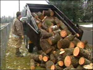 Free Firewood Epping Ryde Area Preview