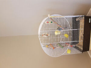 Bird cage, accessories and also 2 budgies