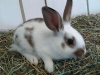 Beautifully Coloured Male Rabbits For Sale at Low Price!