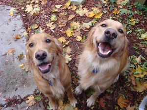 Dog Walking and Pet Sitting - Woodstock and Area