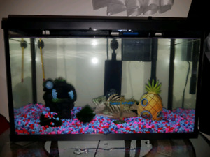 fish tank with fish and supplies
