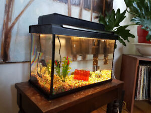 5 Gallon Fish tank with EVERYTHING