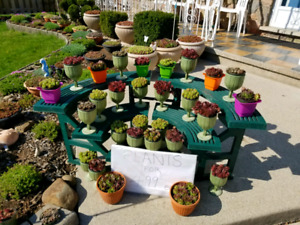 PLANT SALE  Succulents