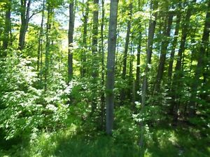 Land for Sale Gatineau Ottawa / Gatineau Area image 4