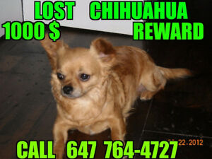 chihuahua stolen