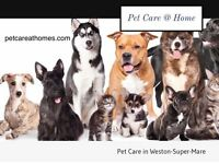 Pet care in your home and Dog Walking