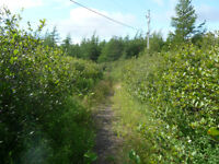 2.3 Acres Land for Sale in Holyrood, NL