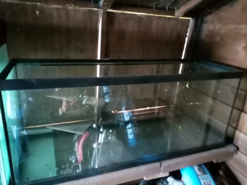 Fish tank | in Larne, County Antrim | Gumtree