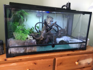 Ball Python, Terrarium and Decocarations