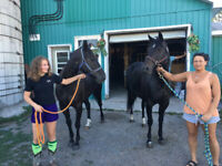 Cheap cheap horse boarding