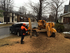 STUMP GRINDING / STUMP REMOVAL * tree removal, good rates
