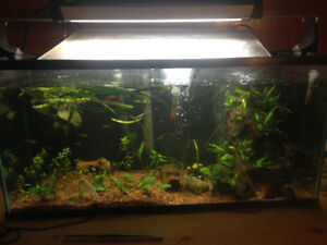 33 gallon aquarium