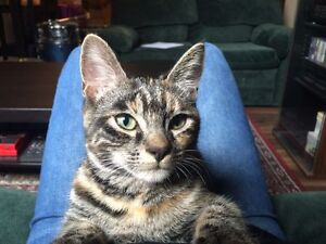 Adorable small female cat-free!