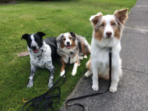 Dog Walker needed - part time casual - Vancouver West Side
