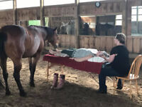 Bars® with HORSES-Access Bars® Practitioner Certification Course