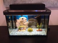 FISH TANK FOR SALE (5 Gallon)
