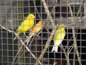 Opening my Aviary to free finches, Budgies or Lovebirds.