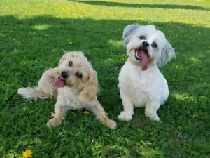 Barrie dog sitting and daycare service