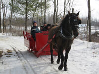 Cheval Canadien