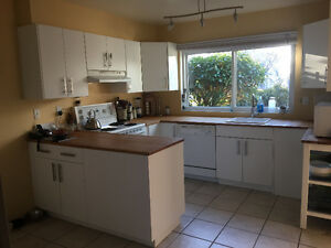 Kitchen cabinets / counters