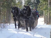 Horse Sleigh/wagon rides for the Holiday Season