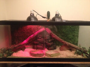 Amazing 100 gallon tank made to fit 2..plus a female ball python
