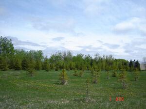 BIRDS HILL PARK AREA - 5 acre lot