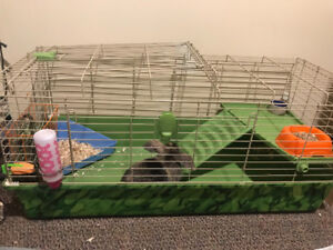Holland Lop bunny with cage and accessories