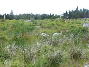 6 surveyed 1 acre lots Cape Broyle area !  Deal !!