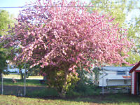 Spring clean ups ,Fences,Brick work,Tree and Landscape Services